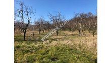 Bursa Kestel Kozluören Köyünde 16800 Metre Armut Ağaçları Gelirli
