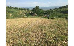 Neşe den 25000 Bursa yenisehir yazılı köyü tarla hobi bahcesi