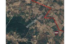 Çanakkale Merkez Dedeler Sarpıngürü Satılık Tarla 10 200m2