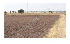 enez yenice köyünde sahil yolu üzerinde 16700 m2 tarla satılıktı