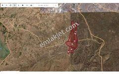 Muş, Malazgirt, Bekirhan blg. de 11.000 dön tarım alanı satılık.
