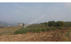 Yenişehir Karaamcada Fırsat 3900m2 Satılık Bakımlı Ceviz Bahçesi