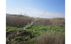 Zeren Emlak'tan Atça ovasında çiftliklerin yanında satılık arazi…
