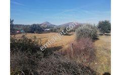 Sahibinden şirin köy  300 mt mesafede mavi su yolu üzeri zeytinlik 5324 m2