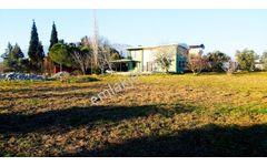 Armutlu Kuştepesi Mevkisinde 7900 m² Tarla ve  200 m² Ev Satılık