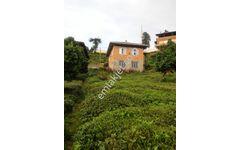 Rize derepazarı erikliman mahallesinde satılık arazi