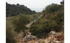 Antalya  Kaş  Bezirgan Sahilde Satılık 2B Arsa