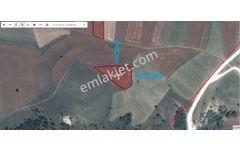 UZMANLAR'dan Satılık Tarla 3148 m2 Bilecik Yenipazar Tohumlar Kö