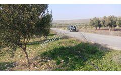akhisar 10.500 m2 trile bahçesi köy yoluna cepheli 195.000 tl