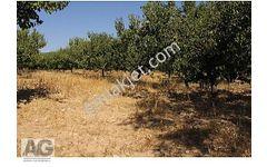 Isparta Yalvaç Göle Yakın Satılık Kayısılık Sulak Bahçe 5750m2