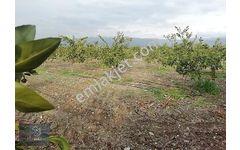 Dönmez GAYRİMENKUL den Erzin Yolu Üzeri Satılık Bahçe