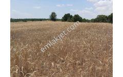 gördes de ceviz ve zeytin ekimine uygun 53.dönüm arazi 300.000 tl