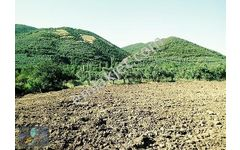 Mudanya Mirzaobada Yolu Olan Müstakil Parselde Yatırımlık Bağ