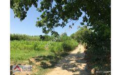 Bursa Osmangazi Soğanlı Botanik Park Arkası 4000 Tarla