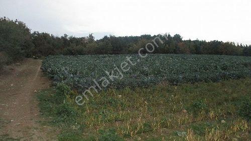 Lapseki Umurbey'de Satılık Yatırımlık Arazi