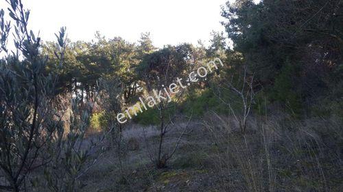 Manisa Büyüksümbüller Satılık Bahçe Hobi