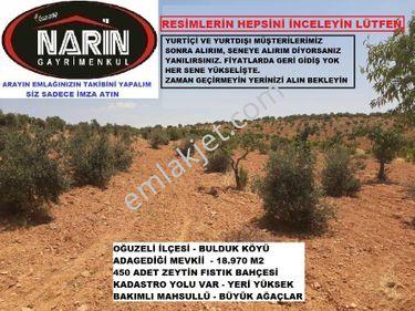 Oğuzeli BULDUK Köyünde 450 Adet Zeytin Fıstık Bahçesi Yolu Var