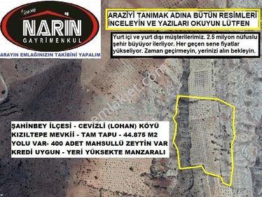 Şahinbey CEVİZLİ Köyünde 400 Adet Zeytinli Arazi Yolu Var Yüksekt
