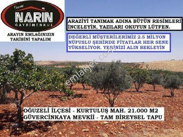 Oğuzeli KURTULUŞ Mahallesinde 150 Fıstık 300 Zeytin Ağacı var