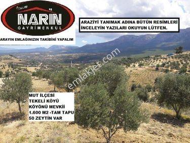 Mersin Mut TEKELİ Köyünde 50 Adet Zeytinli Yüksek Konumlu Manzara