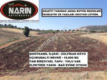 Şehitkamil ZÜLFİKAR Köyünde Yaklaşık 300 Adet Zeytin Fidanı Var