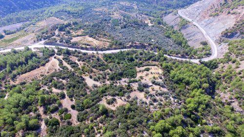 Dalaman Taşlıburun'da Satılık 130 Dönüm Tarla