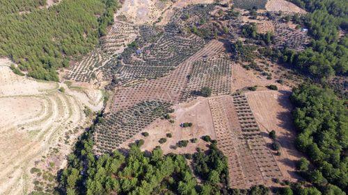 Dalaman'da Taşlıburun'da 42 Dönüm Satılık Tarla