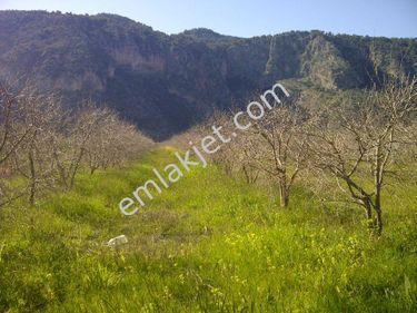 Ortaca Yeşilyurt Mevkiide Satılık Nar Bahçesi Ref.Kodu:sk537