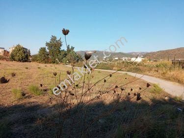Güzelbahçe Çamlı da İdeal Yatırımlık 55 000m2 Tarla