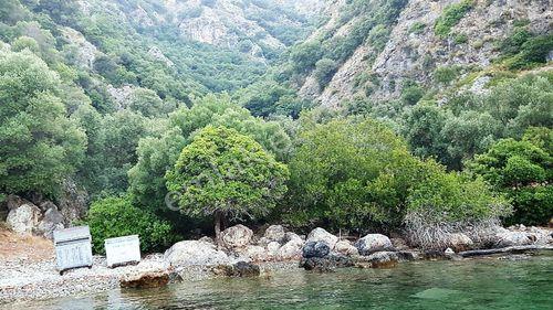 Dalaman'da Deniz Manzaralı 6 Dönüm Zeytinlik