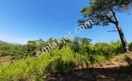 Dalaman Taşlıburun 1083m2 Satılık Arazi Ref.Kodu:dma979