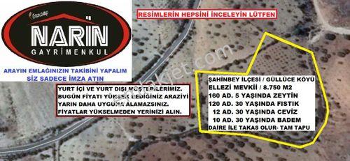 Şahinbey GÜLLÜCE'de 160 Zeytin, 120 Fıstık, 12 Ceviz, 10 Badem