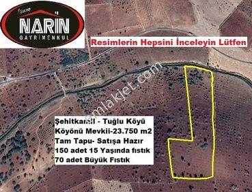 Şehitkamil TUĞLU Köyünde 220 adet fıstık ağaçlı bakımlı arazi