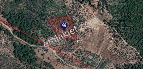Dalaman Şerefler Mahallesinde Satılık 5000 m² Tapulu Arazi