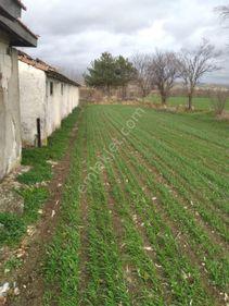 Kırklareli Pınarhisar Orta koyu satılık 23800 m2 hazır çiftlik