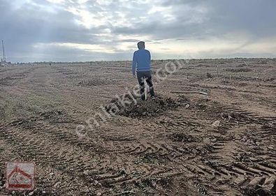 Yazıhan Sivas yoluna cepheli yeni dikilmiş kayısı bhcesi