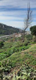 derepazari erikliman mahallesi satılık ev yapımı na uygun arazi