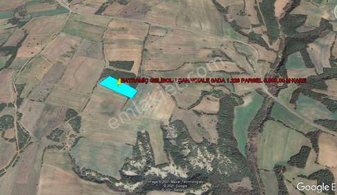 GELİBOLU BAYRAMİİÇ DE KELEPİR 5.800,00 M KARE TARLA