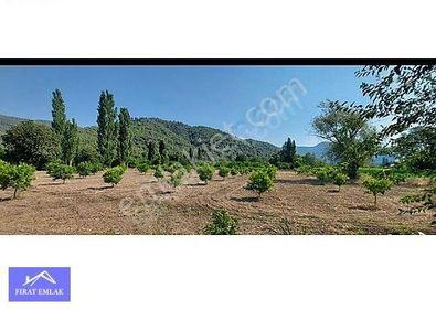 Muğla Ortaca Okçular mh 6000 m2 tek tapu Limon bahçesi