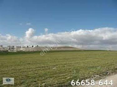 MMG'den ovacık da 490 başlı ruhsatlı daire takaslı çiftlik yeri