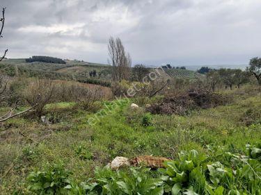 Bursa Mudanya Akköy mhde satılık hobi bahçesi