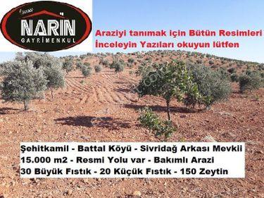 Şehitkamil BATTAL Köyünde Fıstık Zeytin Bahçesi Yolu var Bakımlı