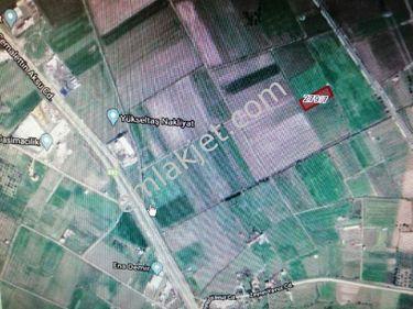 ALİAĞA SANAYİSİNE VE KARAYOLUNA YAKIN 2350 m2 KİRALIK TARLA