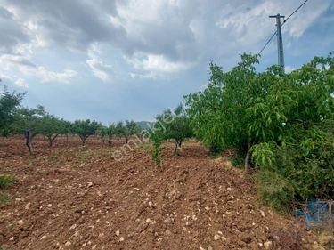 Şehitkamil DIMIŞIKLI Köyünde Bağ evine uygun Meyve Bahçesi Yol
