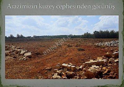 Muğla Milas Mutluca da Satılık Arazi