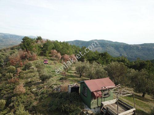 Çanakkale Küçükkuyu Küçükçetmi Köyü Satılık 9228 m2 Zeytinlik