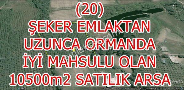 20- ŞEKER EMLAKTAN UZUNCAORMANDA 10500m2 SATILIK BAKIMLI  FINDIK