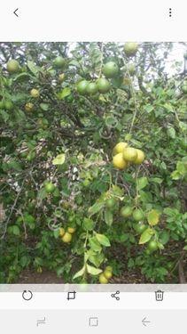 erdemli limon emlaktan satılık müstakil ev