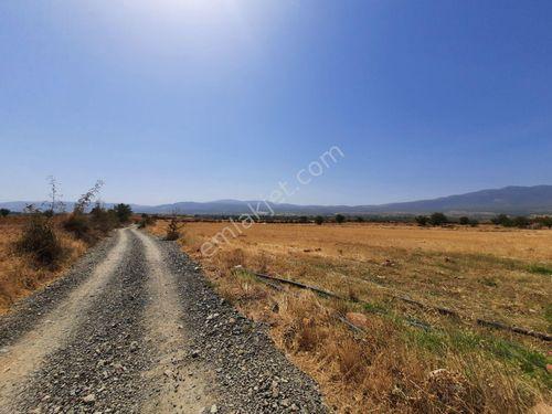Karacasu Işıklarda kırmızı verimli toprağı olan köşebaşı tarla..