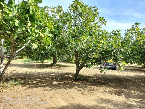 Satılık Emlakturadan Edremit Cennetayağı da imara Yakın Bahçe